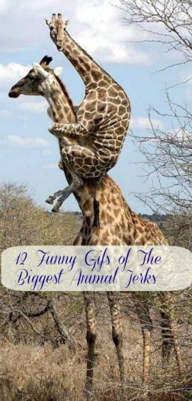 12 Funny Gifs of The Biggest Animal Jerks