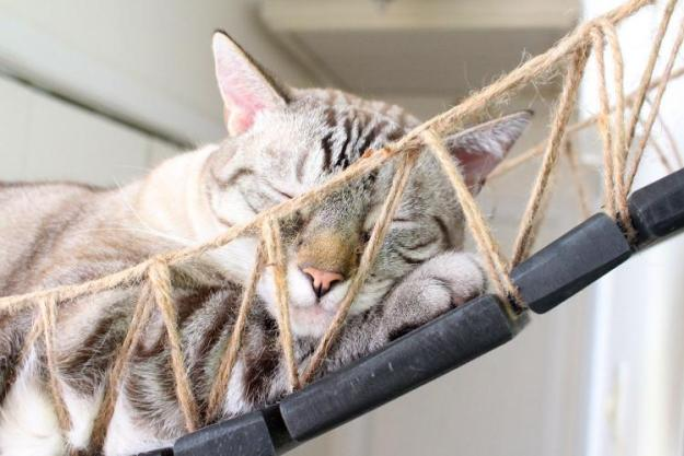 cat sleeping on a cat bridge
