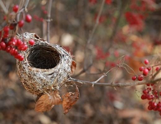 Empty Nester & Thriving