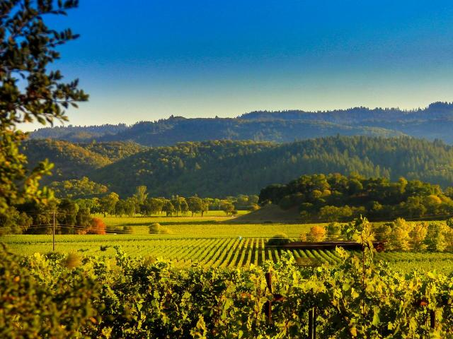 Discovery Of The Wine & Food Of Napa Valley