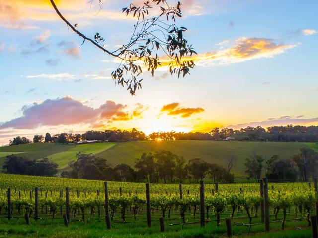 Sunset at Killara Estate