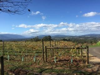 Elmwood Estate view