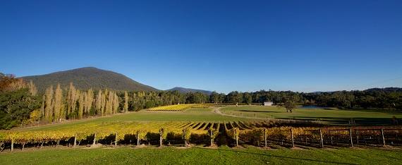 Panoramic vineyard shot Boat O'Craigo