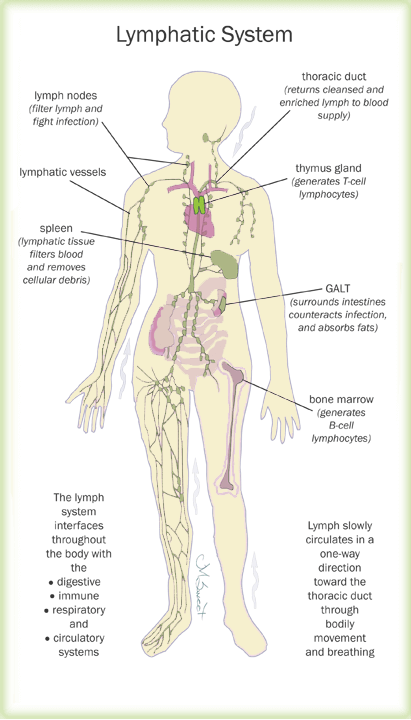 diagram nodes lymphatic system 2004 jeep grand cherokee limited radio wiring the and your health women s network labeled