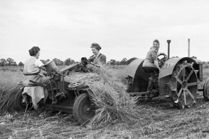 Three Land Girls harvest flax in a field which had been derelict the previous year. One woman drives the tractor as the two others sit at the rear on the flax-pulling 'trailer'. Source: IWM D 9617