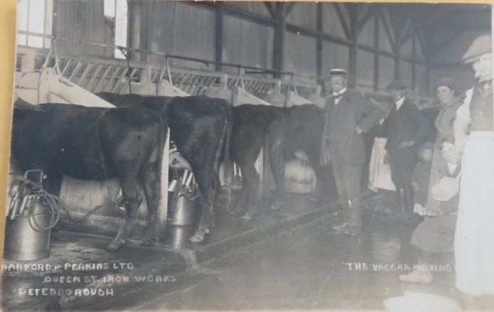 Milking at Barford and Perkins Ltd, Queen St Iron Works, Peterborough