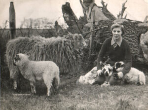 Unknown Land Girl and sheep