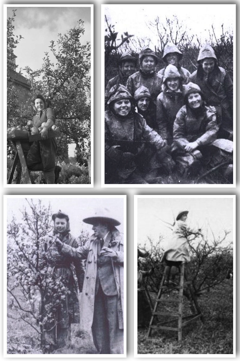 Women's Land Army May Collage