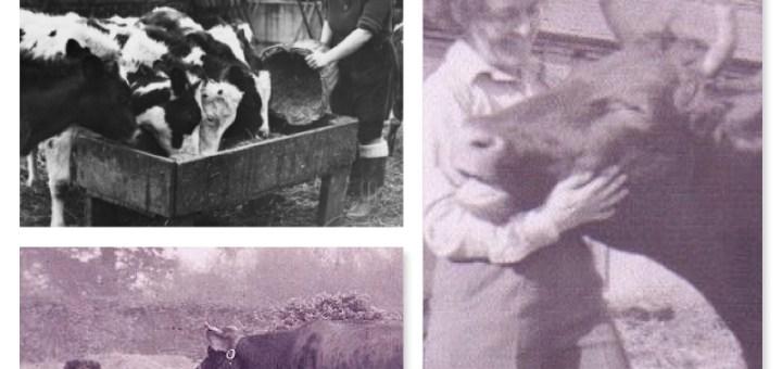 November Monthly Farming Activity: Feeding Livestock