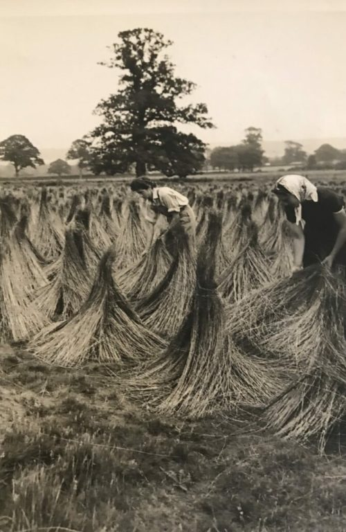 Land Girls At Pluckley