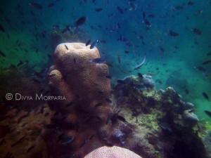 Woman On Vacation: Scuba Diving In Thailand