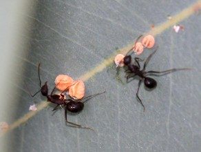 The productivity secrets of ants that every working woman must know