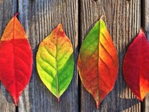tips-for-managing-change