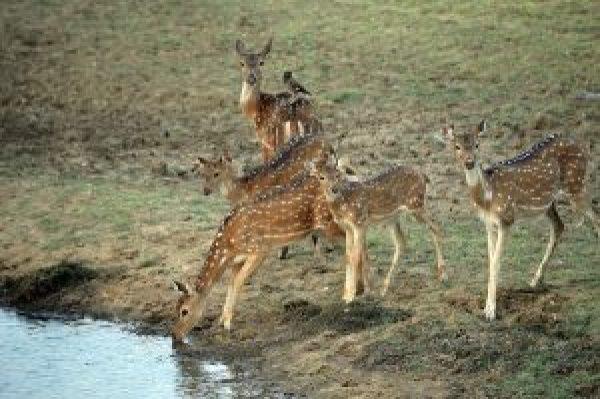 satpura-national-park