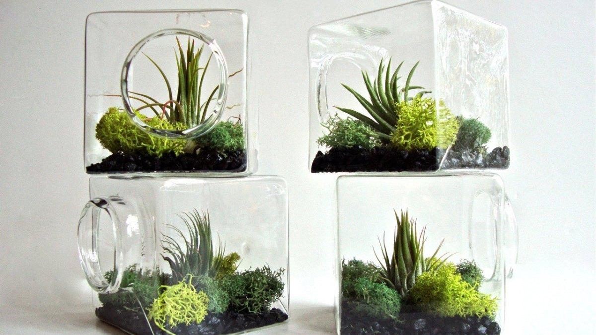 Terrariums Natural Habitat for your Niche!