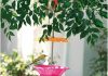 How to make a bird feeder for your garden by yourself