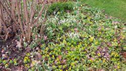 Frühlingskribbeln in Vriescheloo