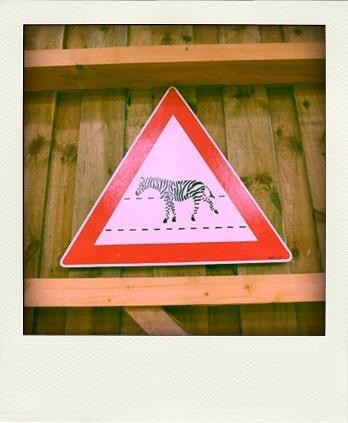 zebre-pola