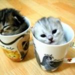 Lovely Kittens 2