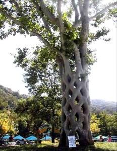 Unique and Unusual Trees 2