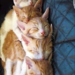 Lovely Kittens 3