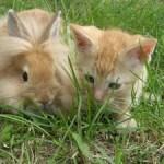 Lovely Kittens 4