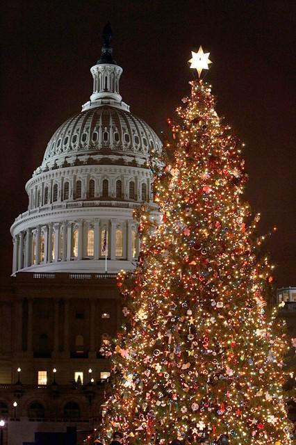 Capitol Christmas Tree