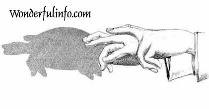 Finger Art Tortoise