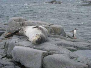 Antarctica Photo 07