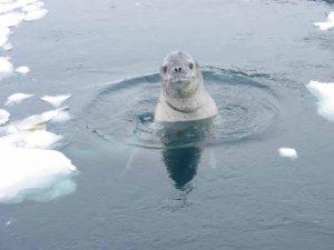 Antarctica Photo 16