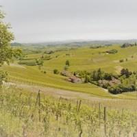Tra le vigne del Monferrato astigiano