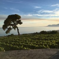 Una terrazza sul mare di Bordighera