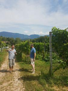 Vigna Niedermayr vino naturale