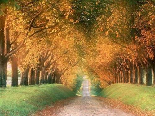 Autumn Tree Tunnel, USA