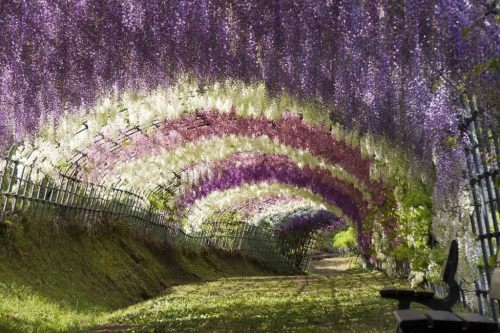 Top 10 Most Amazing Tree Tunnels