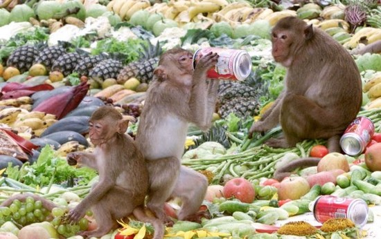 Monkey Buffet Bizarre Festivals