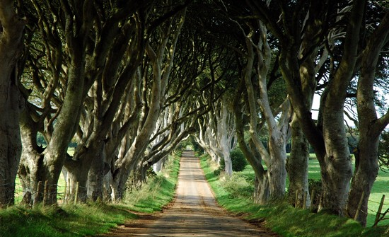 The Dark Hedges - Beautiful Places To Visit