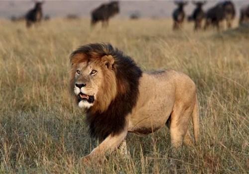 Top 10 Deadliest Animals