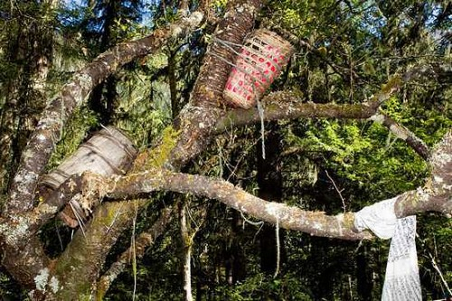 Tree-Bound