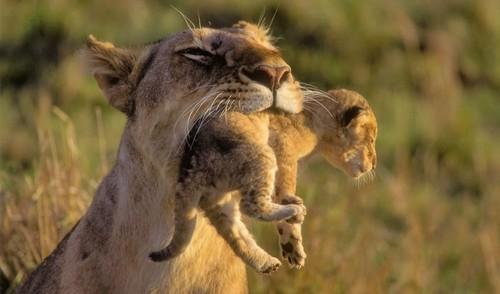 Animal Moms And Babies