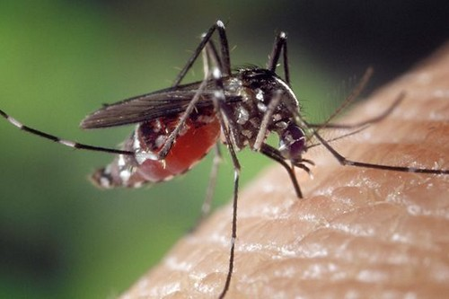Deadliest Diseases Caused by Mosquitoes