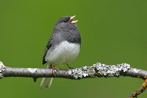 Funny Looking Birds