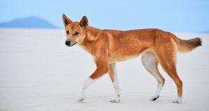 Beautiful but Surprisingly Dangerous Animals