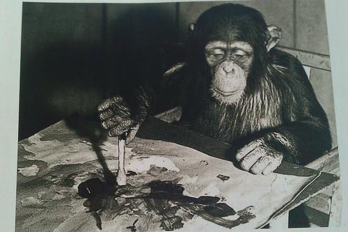 Congo, the Chimpanzee
