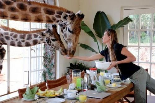 Giraffe Manor Hotel Kenya