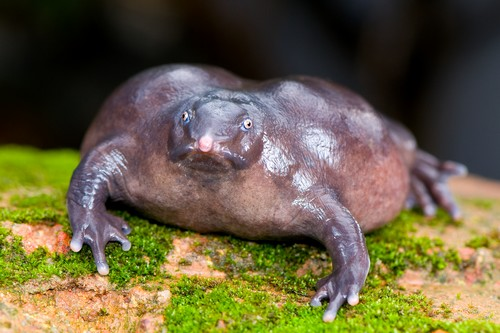 Strange and Hideous Creatures