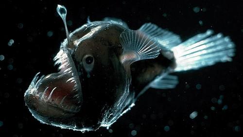 Underwater Creatures anglerfish