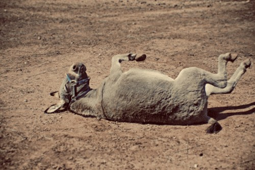 Stoning The Donkey in Spain