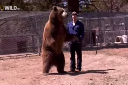 10 Most Shocking Animal Attacks