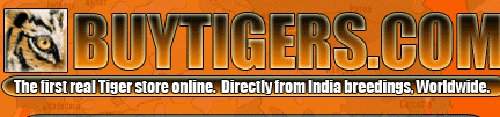 Buy Tigers Online Internet Hoaxes